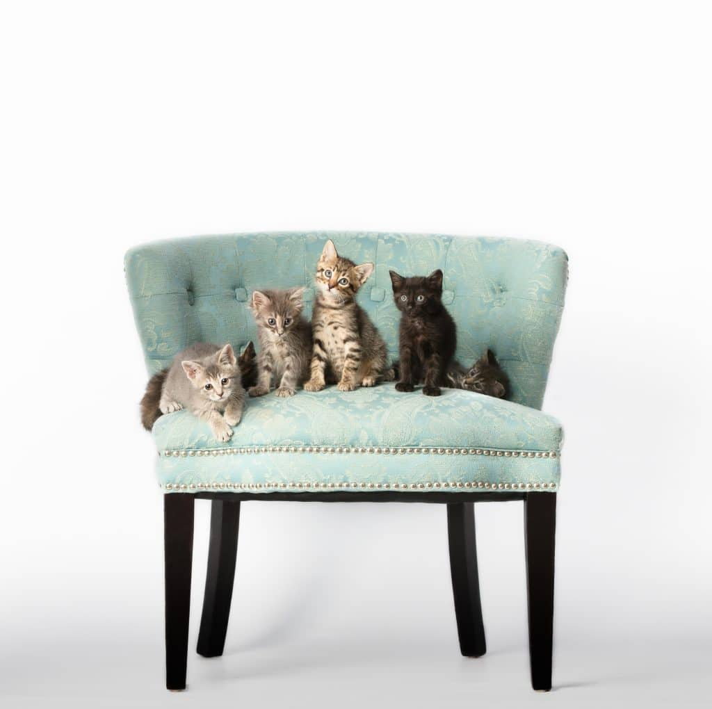 Chattanooga Commercial Photography Photographer Pets Animals